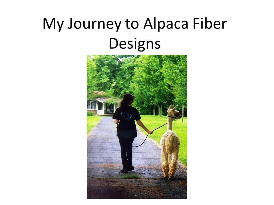 My Journey to Alpaca Fiber Designs