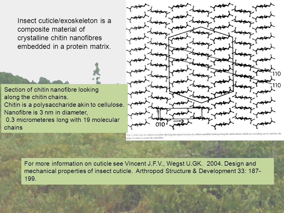 For more information on cuticle see Vincent J.F.V., Wegst U.GK.