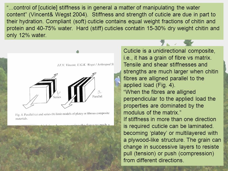 ...control of [cuticle] stiffness is in general a matter of manipulating the water content (Vincent& Wegst 2004).