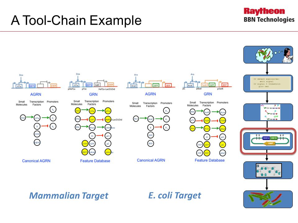 A Tool-Chain Example If detect explosives: emit signal If signal > threshold: glow red Mammalian Target E.
