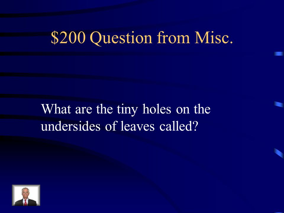 $100 Answer from Misc. food web