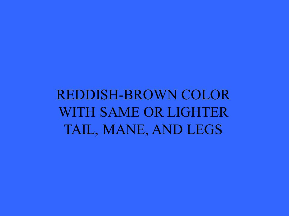REDDISH-BROWN COLOR WITH SAME OR LIGHTER TAIL, MANE, AND LEGS