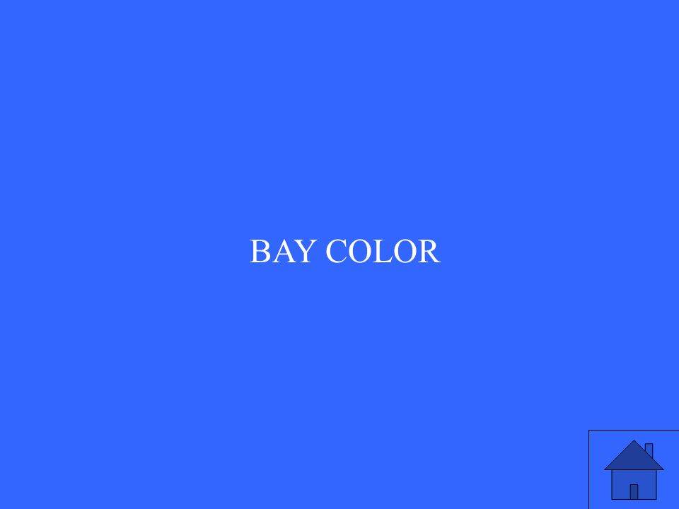 BAY COLOR