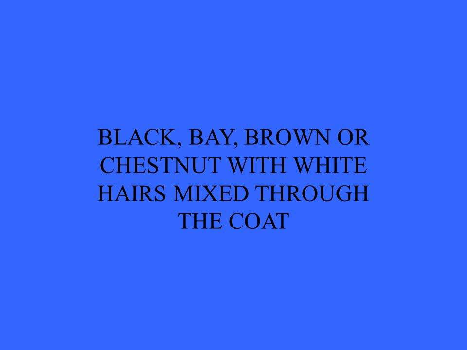 BLACK, BAY, BROWN OR CHESTNUT WITH WHITE HAIRS MIXED THROUGH THE COAT
