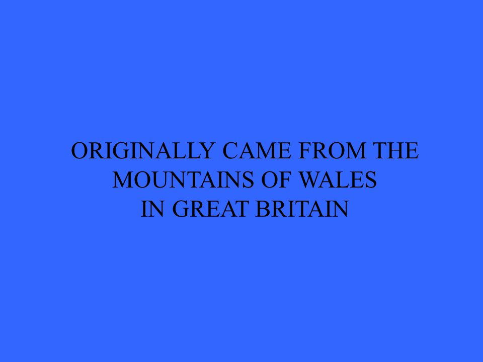 ORIGINALLY CAME FROM THE MOUNTAINS OF WALES IN GREAT BRITAIN