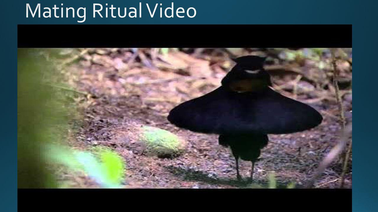 Electric Bluebird