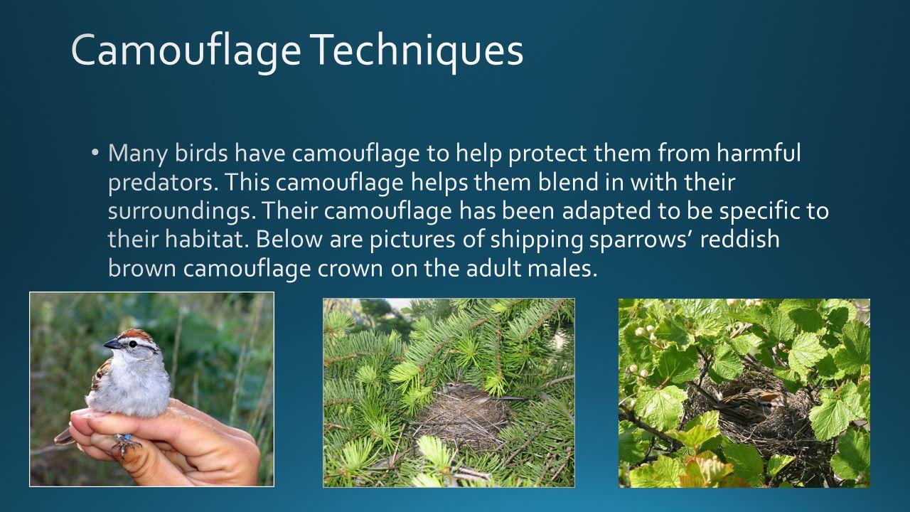 Bird Of ParadiseFrigate Bird Mating Website