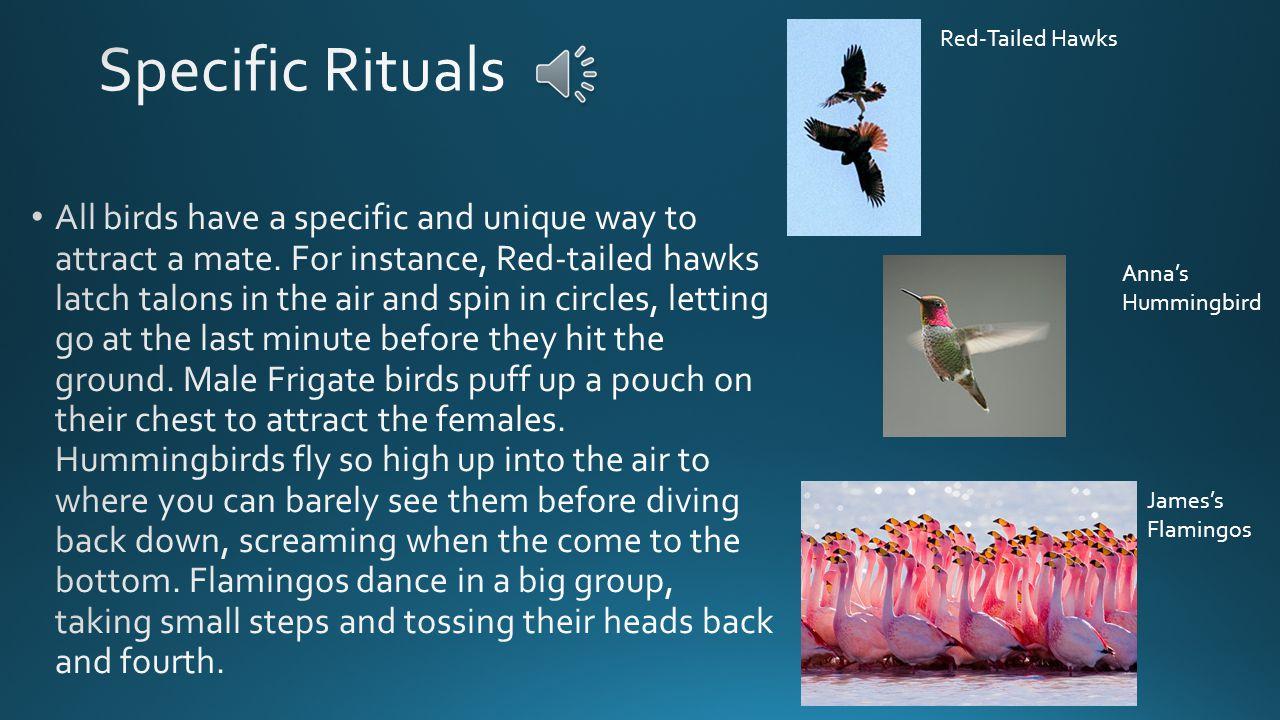 Junco Robin Migratory Birds