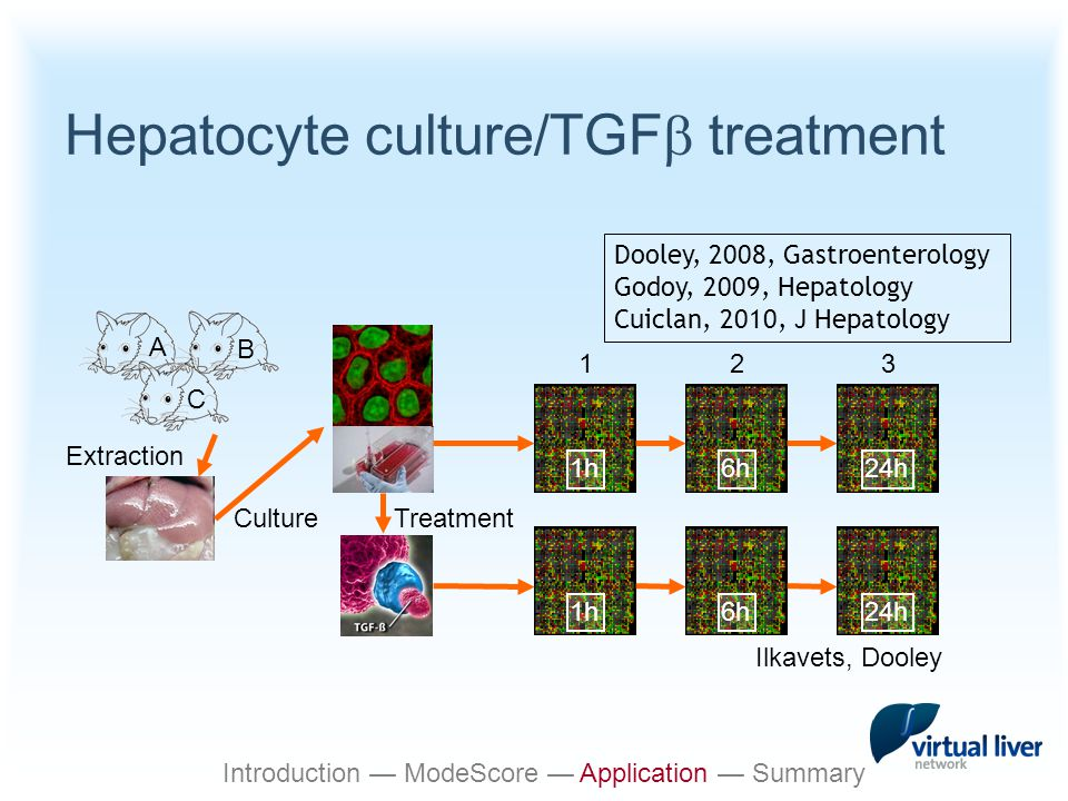 Hepatocyte culture/TGF  treatment Culture Extraction 1h A B C 6h24h 1h6h24h 123 Ilkavets, Dooley Treatment Dooley, 2008, Gastroenterology Godoy, 2009, Hepatology Cuiclan, 2010, J Hepatology Introduction — ModeScore — Application — Summary