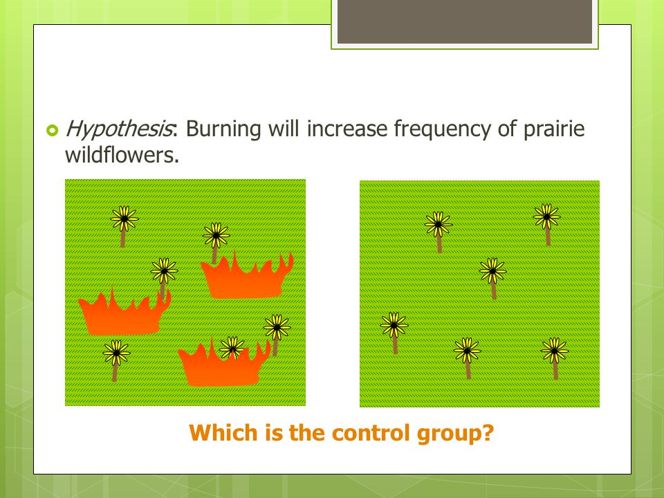 Hypothesis: Burning will increase frequency of prairie wildflowers. Which is the control group