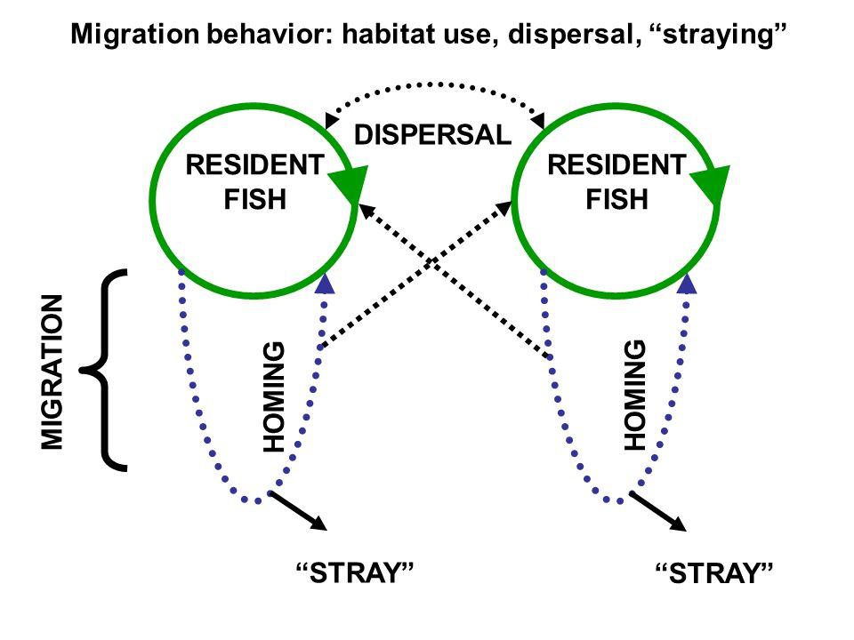 RESIDENT FISH MIGRATION RESIDENT FISH DISPERSAL HOMING Migration behavior: habitat use, dispersal, straying STRAY