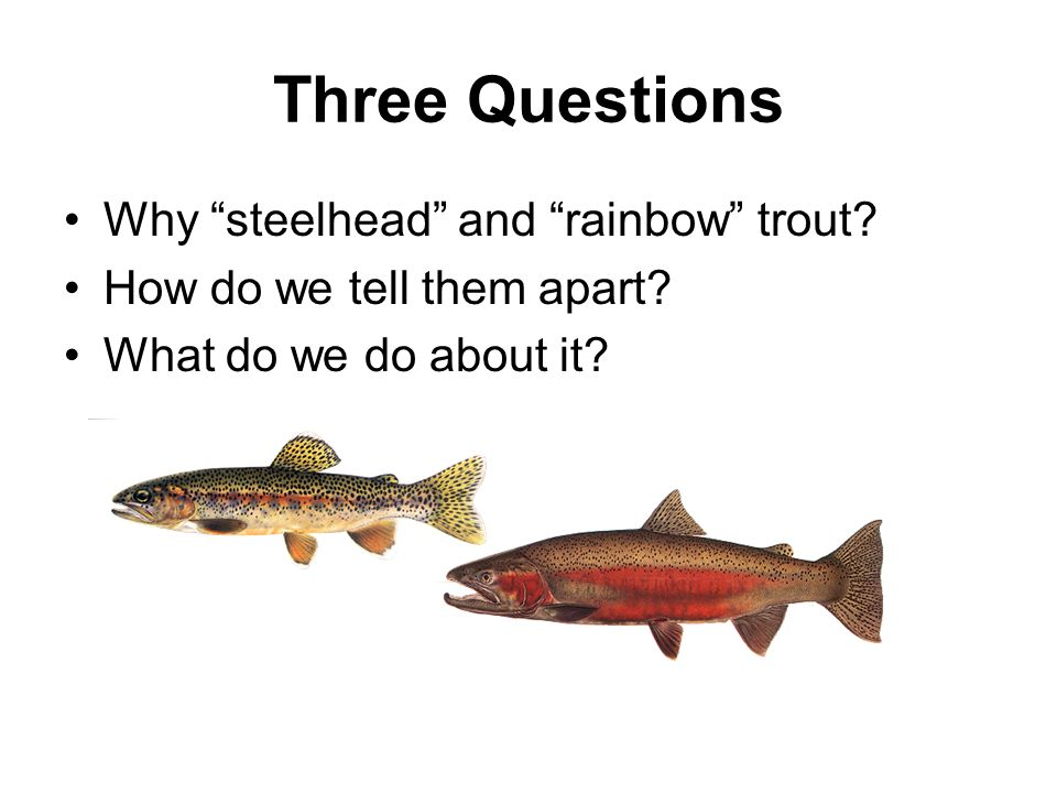 "Three Questions Why ""steelhead"" and ""rainbow"" trout? How do we tell them apart? What do we do about it?"