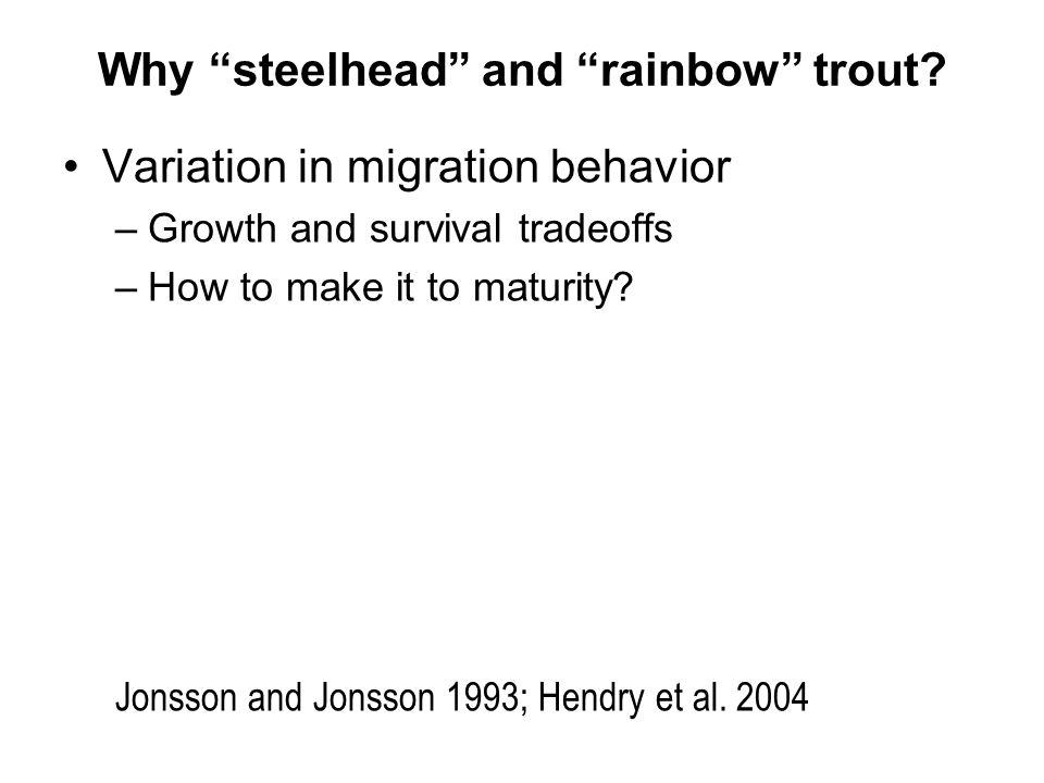 Why steelhead and rainbow trout.