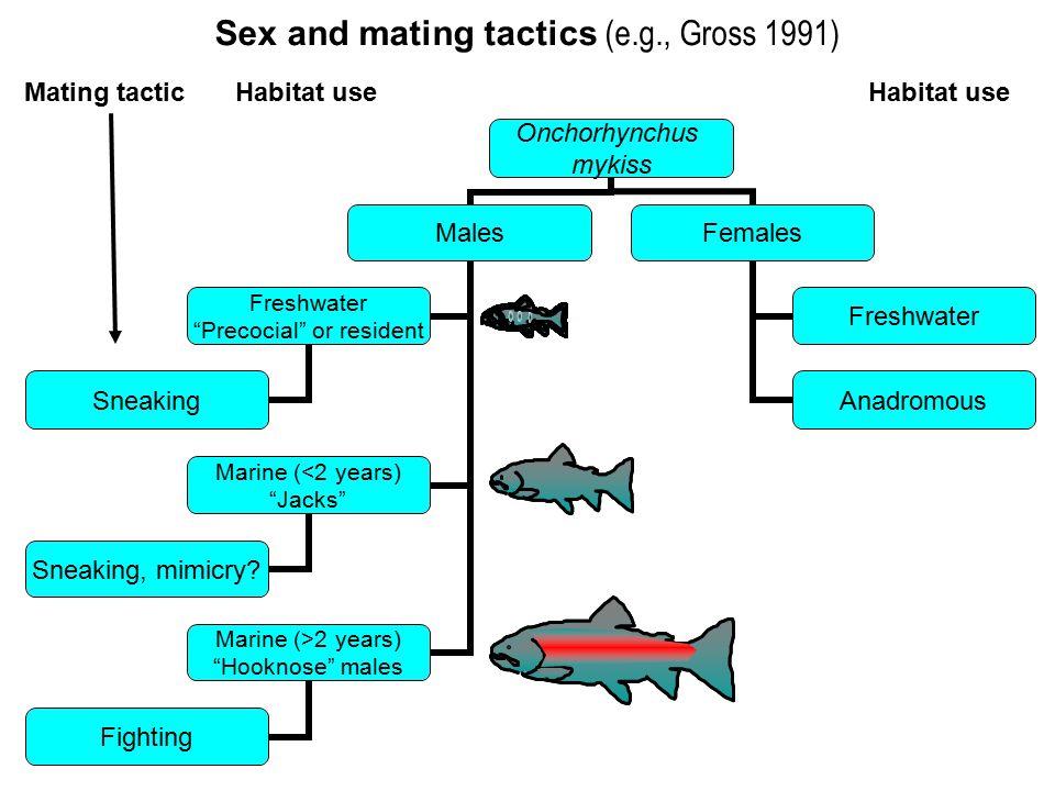 Sex and mating tactics (e.g., Gross 1991) Mating tacticHabitat useHabitat use