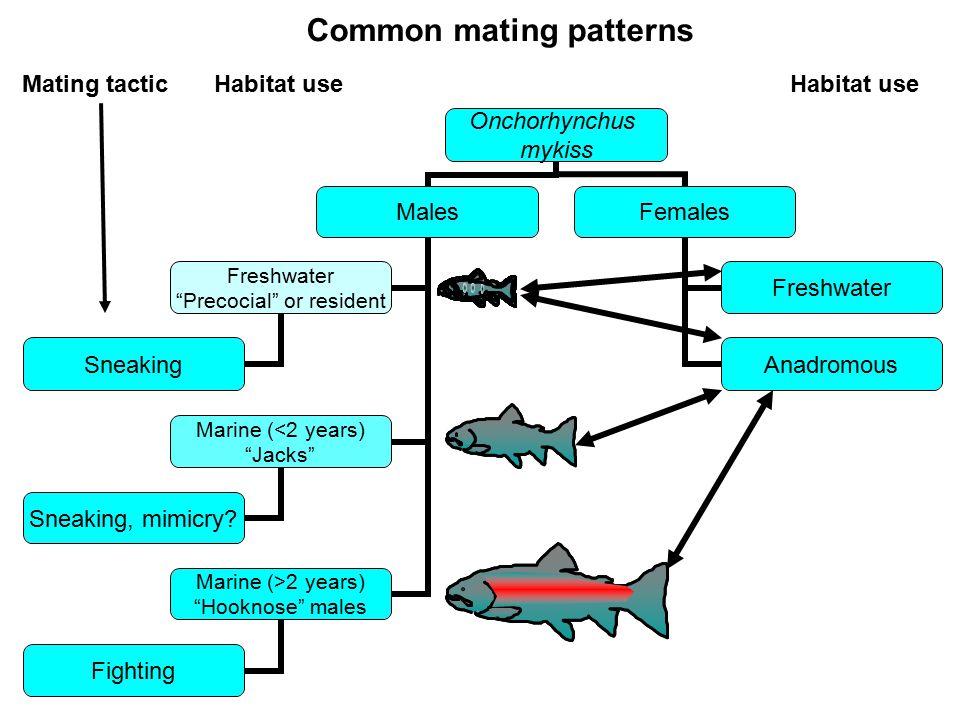 Common mating patterns Mating tacticHabitat useHabitat use