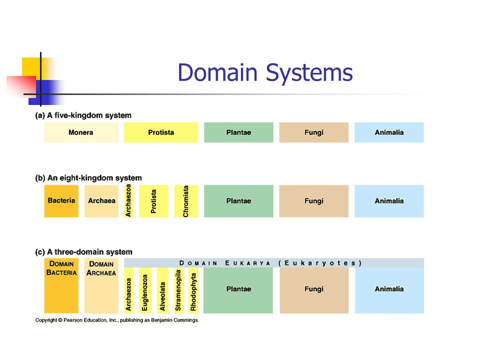 Domain Systems