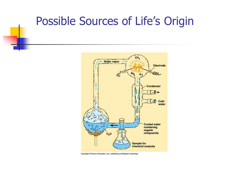 Possible Sources of Life's Origin