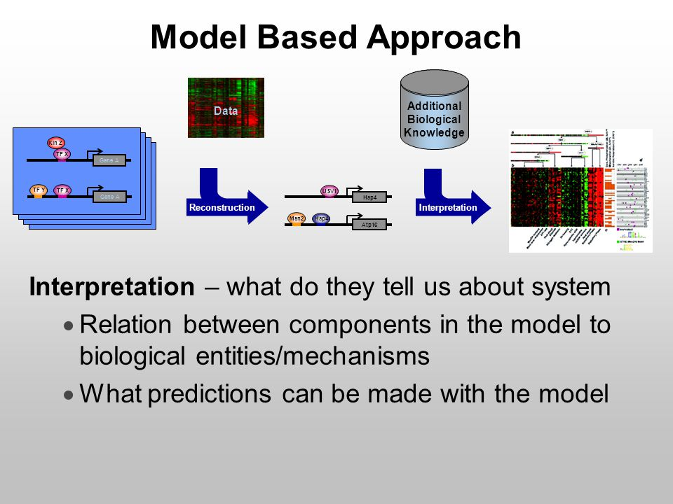 Model Based Approach Interpretation – what do they tell us about system  Relation between components in the model to biological entities/mechanisms 