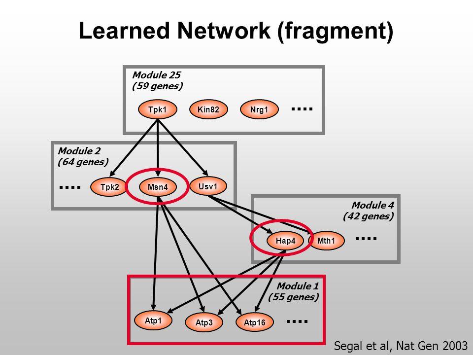 Learned Network (fragment) Atp1 Atp3 Module 1 (55 genes) Atp16 Hap4Mth1 Module 4 (42 genes) Kin82Tpk1 Module 25 (59 genes) Nrg1 Module 2 (64 genes) Msn4 Usv1 Tpk2 Segal et al, Nat Gen 2003