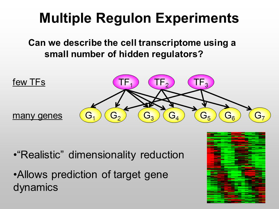 "Can we describe the cell transcriptome using a small number of hidden regulators? Multiple Regulon Experiments ""Realistic"" dimensionality reduction Al"