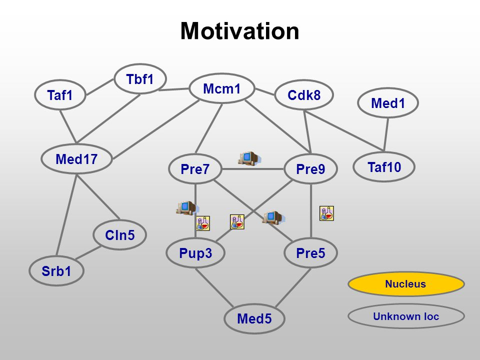 Pre7Pre9 Tbf1 Cdk8 Med17 Cln5 Taf10 Pup3Pre5 Med5 Srb1 Med1 Taf1 Mcm1 Motivation Nucleus Unknown loc