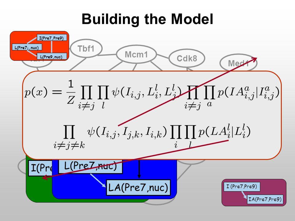 Pre7Pre9 Tbf1 Cdk8 Med17 Cln5 Taf10 Pup3Pre5 Med5 Srb1 Med1 Taf1 Mcm1 Building the Model I(Pre7,Pre9) I(Pre5,Pre9) I(Pre7,Pre5) LA(Pre7,nuc) L(Pre7,nuc) IA(Pre7,Pre9) I (Pre7,Pre9) L(Pre9,nuc) L(Pre7 1,nuc)