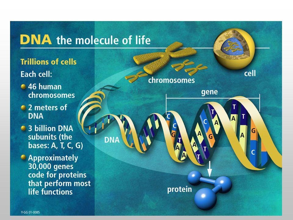 Example  Upstream regions from yeast Sacharomyces cerevisiae genes (300-600bp) 5'- TCTCTCTCCACGGCTAATTAGGTGATCATGAAAAAATGAAAAATTCATGAGAAAAGAGTCAGACATCGAAACATACAT 5'- ATGGCAGAATCACTTTAAAACGTGGCCCCACCCGCTGCACCCTGTGCATTTTGTACGTTACTGCGAAATGACTCAACG 5'- CACATCCAACGAATCACCTCACCGTTATCGTGACTCACTTTCTTTCGCATCGCCGAAGTGCCATAAAAAATATTTTTT 5'- TGCGAACAAAAGAGTCATTACAACGAGGAAATAGAAGAAAATGAAAAATTTTCGACAAAATGTATAGTCATTTCTATC 5'- ACAAAGGTACCTTCCTGGCCAATCTCACAGATTTAATATAGTAAATTGTCATGCATATGACTCATCCCGAACATGAAA 5'- ATTGATTGACTCATTTTCCTCTGACTACTACCAGTTCAAAATGTTAGAGAAAAATAGAAAAGCAGAAAAAATAAATAA 5'- GGCGCCACAGTCCGCGTTTGGTTATCCGGCTGACTCATTCTGACTCTTTTTTGGAAAGTGTGGCATGTGCTTCACACA …HIS7 …ARO4 …ILV6 …THR4 …ARO1 …HOM2 …PRO3 5'- TCTCTCTCCACGGCTAATTAGGTGATCATGAAAAAATGAAAAATTCATGAGAAAAGAGTCAGACATCGAAACATACAT 5'- ATGGCAGAATCACTTTAAAACGTGGCCCCACCCGCTGCACCCTGTGCATTTTGTACGTTACTGCGAAATGACTCAACG 5'- CACATCCAACGAATCACCTCACCGTTATCGTGACTCACTTTCTTTCGCATCGCCGAAGTGCCATAAAAAATATTTTTT 5'- TGCGAACAAAAGAGTCATTACAACGAGGAAATAGAAGAAAATGAAAAATTTTCGACAAAATGTATAGTCATTTCTATC 5'- ACAAAGGTACCTTCCTGGCCAATCTCACAGATTTAATATAGTAAATTGTCATGCATATGACTCATCCCGAACATGAAA 5'- ATTGATTGACTCATTTTCCTCTGACTACTACCAGTTCAAAATGTTAGAGAAAAATAGAAAAGCAGAAAAAATAAATAA 5'- GGCGCCACAGTCCGCGTTTGGTTATCCGGCTGACTCATTCTGACTCTTTTTTGGAAAGTGTGGCATGTGCTTCACACA …HIS7 …ARO4 …ILV6 …THR4 …ARO1 …HOM2 …PRO3