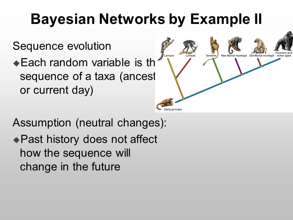 Bayesian Networks by Example II Sequence evolution  Each random variable is the sequence of a taxa (ancestral or current day) Assumption (neutral cha