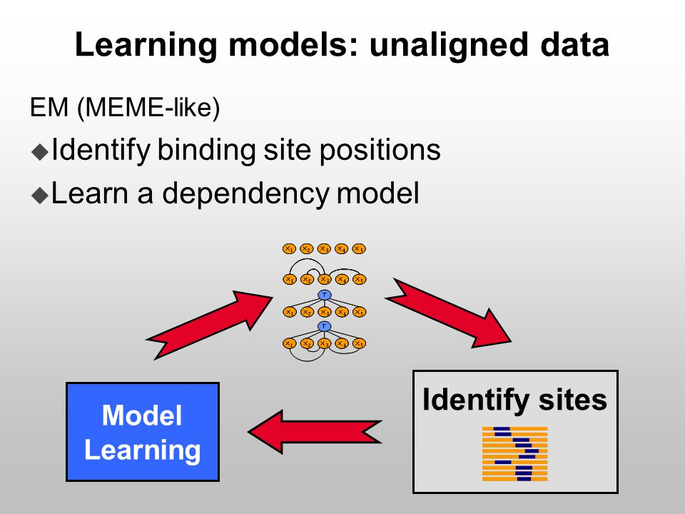 Learning models: unaligned data EM (MEME-like)  Identify binding site positions  Learn a dependency model Model Learning Identify sites