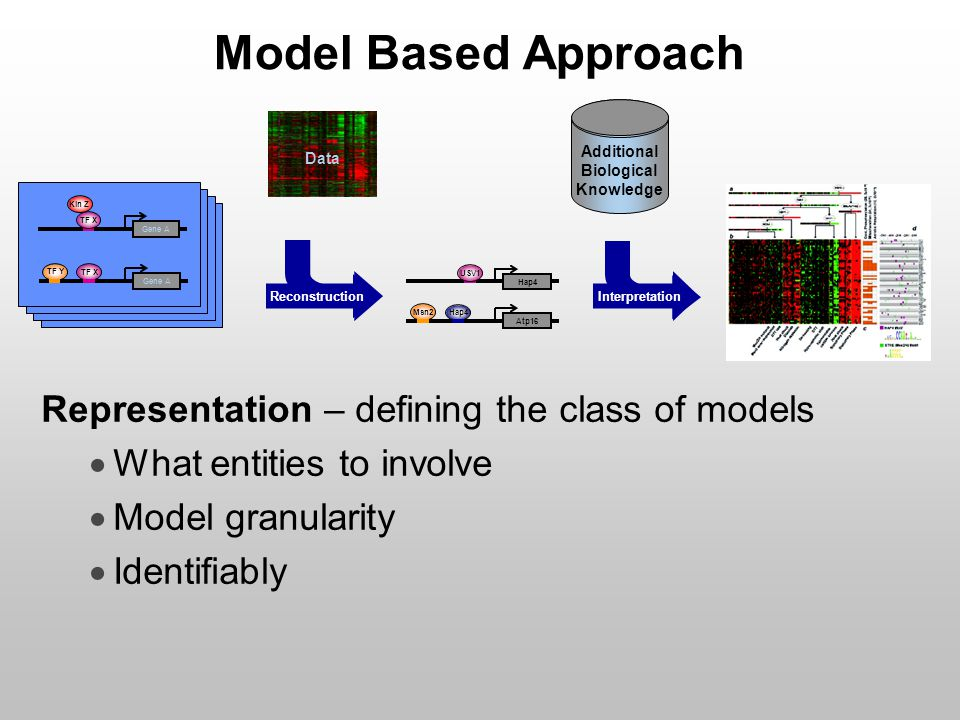 Model Based Approach Representation – defining the class of models  What entities to involve  Model granularity  Identifiably Kin Z TF X Gene A TF