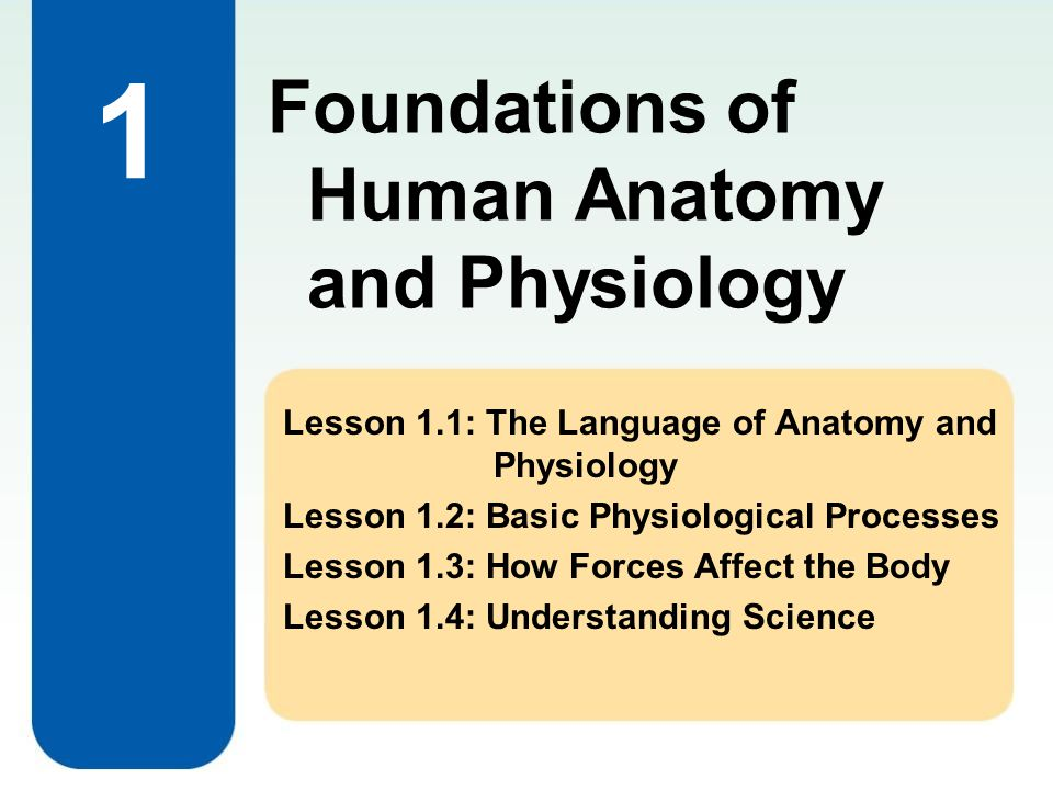 1 Foundations of Human Anatomy and Physiology Lesson 1.1: The Language of Anatomy and Physiology Lesson 1.2: Basic Physiological Processes Lesson 1.3: