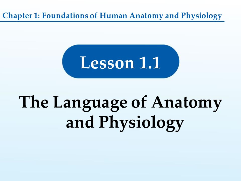 Lesson 1.1 The Language of Anatomy and Physiology Chapter 1: Foundations of Human Anatomy and Physiology