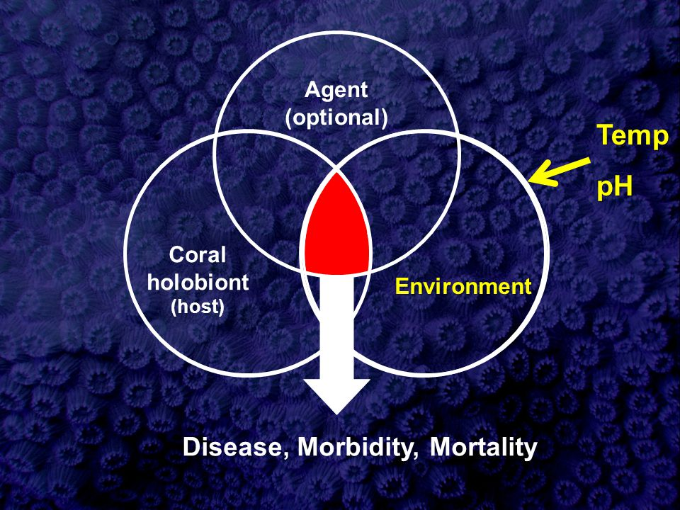 Agent (optional) Disease, Morbidity, Mortality Environment Coral holobiont (host) TemppH