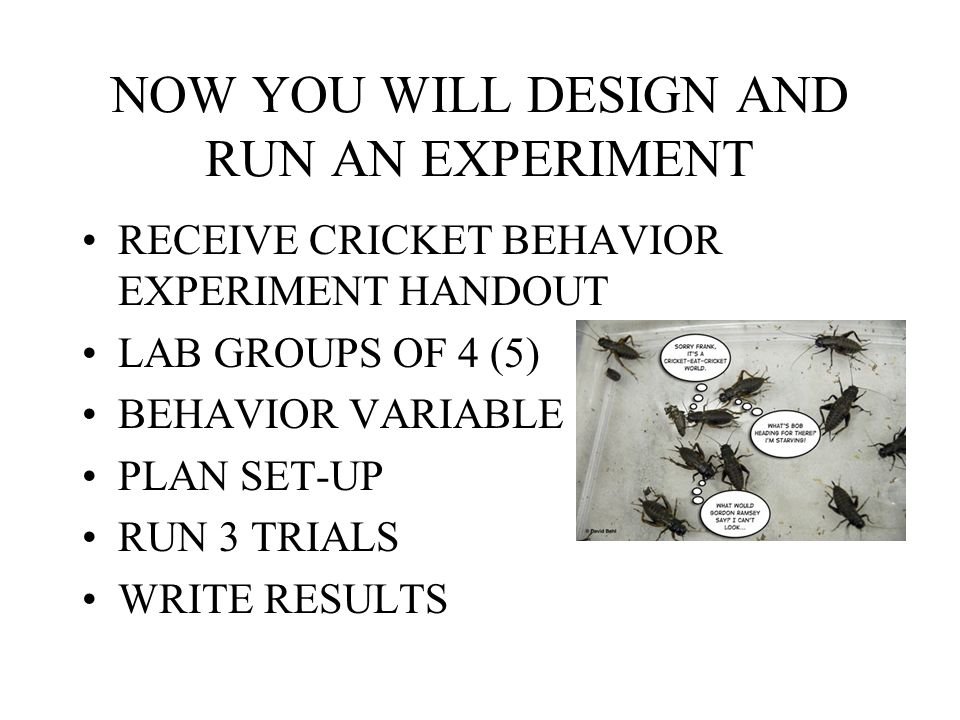 NOW YOU WILL DESIGN AND RUN AN EXPERIMENT RECEIVE CRICKET BEHAVIOR EXPERIMENT HANDOUT LAB GROUPS OF 4 (5) BEHAVIOR VARIABLE PLAN SET-UP RUN 3 TRIALS WRITE RESULTS