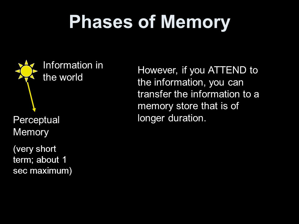 Phases of Memory Information in the world Perceptual Memory (very short term; about 1 sec maximum) However, if you ATTEND to the information, you can transfer the information to a memory store that is of longer duration.