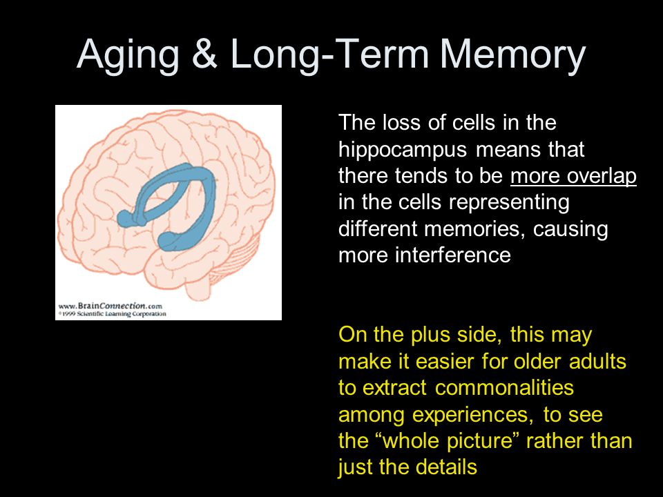 Aging & Long-Term Memory The loss of cells in the hippocampus means that there tends to be more overlap in the cells representing different memories, causing more interference On the plus side, this may make it easier for older adults to extract commonalities among experiences, to see the whole picture rather than just the details