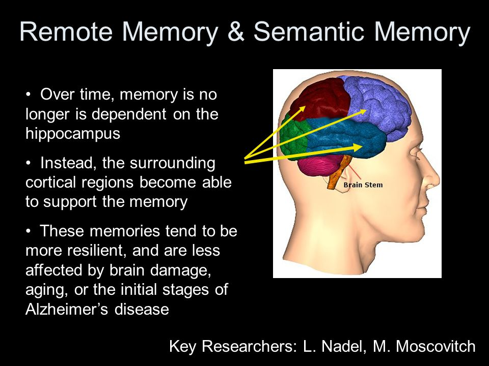 Remote Memory & Semantic Memory Over time, memory is no longer is dependent on the hippocampus Instead, the surrounding cortical regions become able to support the memory These memories tend to be more resilient, and are less affected by brain damage, aging, or the initial stages of Alzheimer's disease Key Researchers: L.