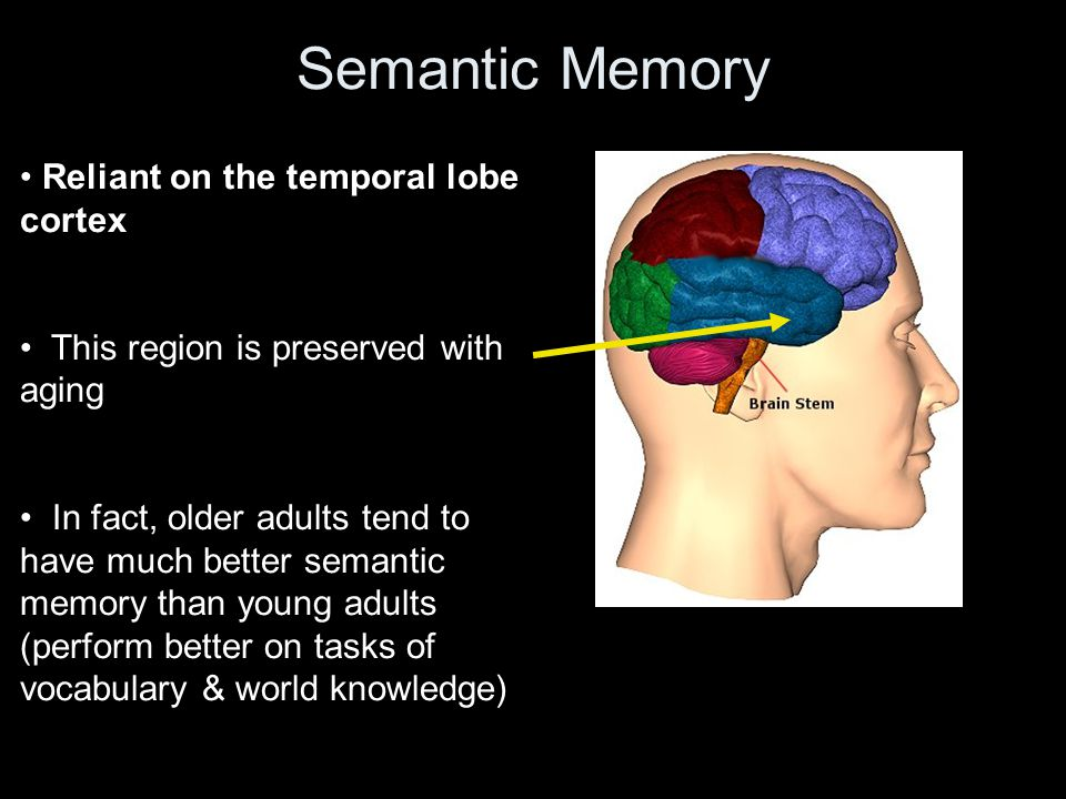 Semantic Memory Reliant on the temporal lobe cortex This region is preserved with aging In fact, older adults tend to have much better semantic memory than young adults (perform better on tasks of vocabulary & world knowledge)