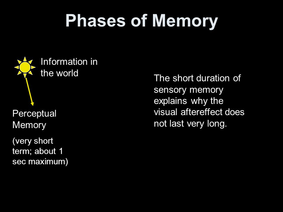 Phases of Memory Information in the world Perceptual Memory (very short term; about 1 sec maximum) The short duration of sensory memory explains why the visual aftereffect does not last very long.