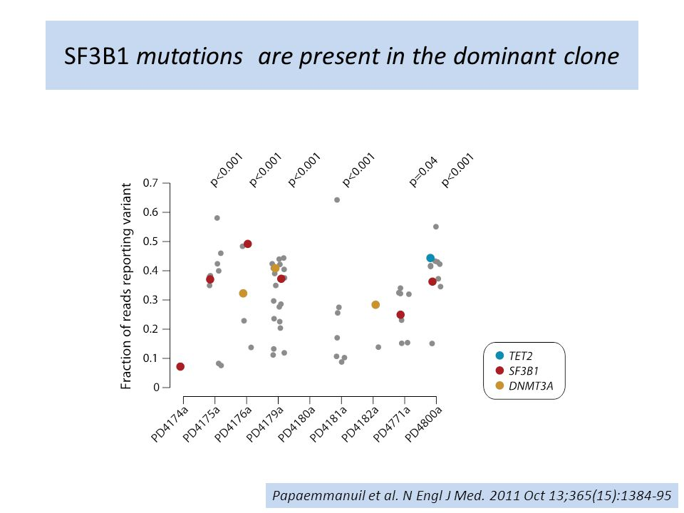 SF3B1 mutations are present in the dominant clone Papaemmanuil et al.
