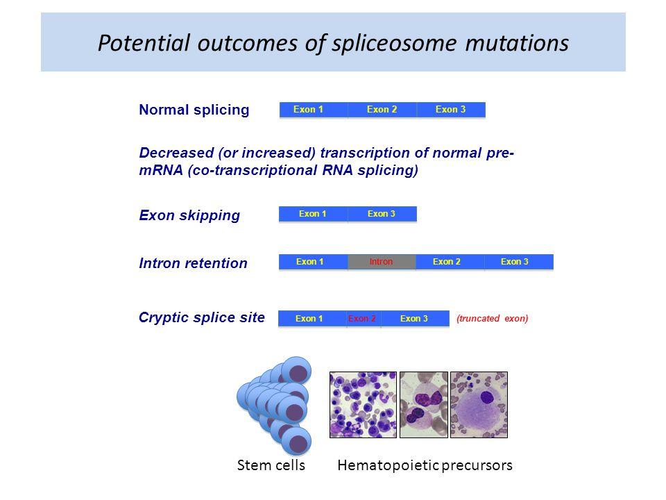 Potential outcomes of spliceosome mutations Normal splicing Exon 1Exon 2Exon 3 Decreased (or increased) transcription of normal pre- mRNA (co-transcriptional RNA splicing) Exon skipping Exon 1Exon 3 Exon 1Exon 2Exon 3Intron Intron retention Cryptic splice site Exon 1Exon 3Exon 2 (truncated exon) Stem cellsHematopoietic precursors
