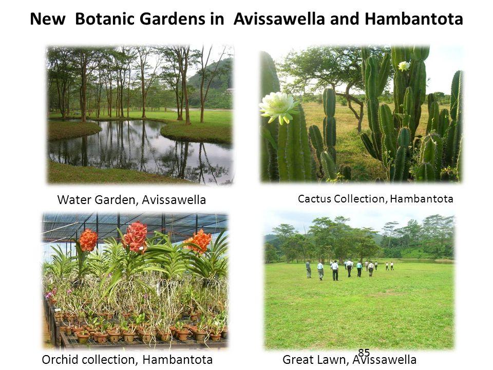 New Botanic Gardens in Avissawella and Hambantota Water Garden, Avissawella Cactus Collection, Hambantota Orchid collection, HambantotaGreat Lawn, Avissawella 85