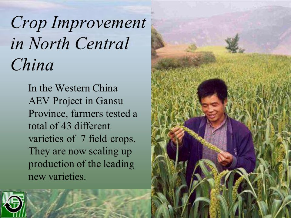 Crop Improvement in North Central China In the Western China AEV Project in Gansu Province, farmers tested a total of 43 different varieties of 7 field crops.