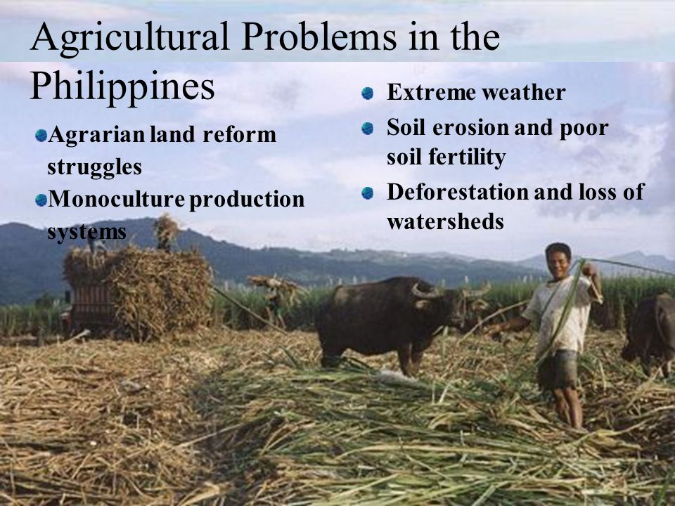 Agricultural Problems in the Philippines Extreme weather Soil erosion and poor soil fertility Deforestation and loss of watersheds Agrarian land reform struggles Monoculture production systems