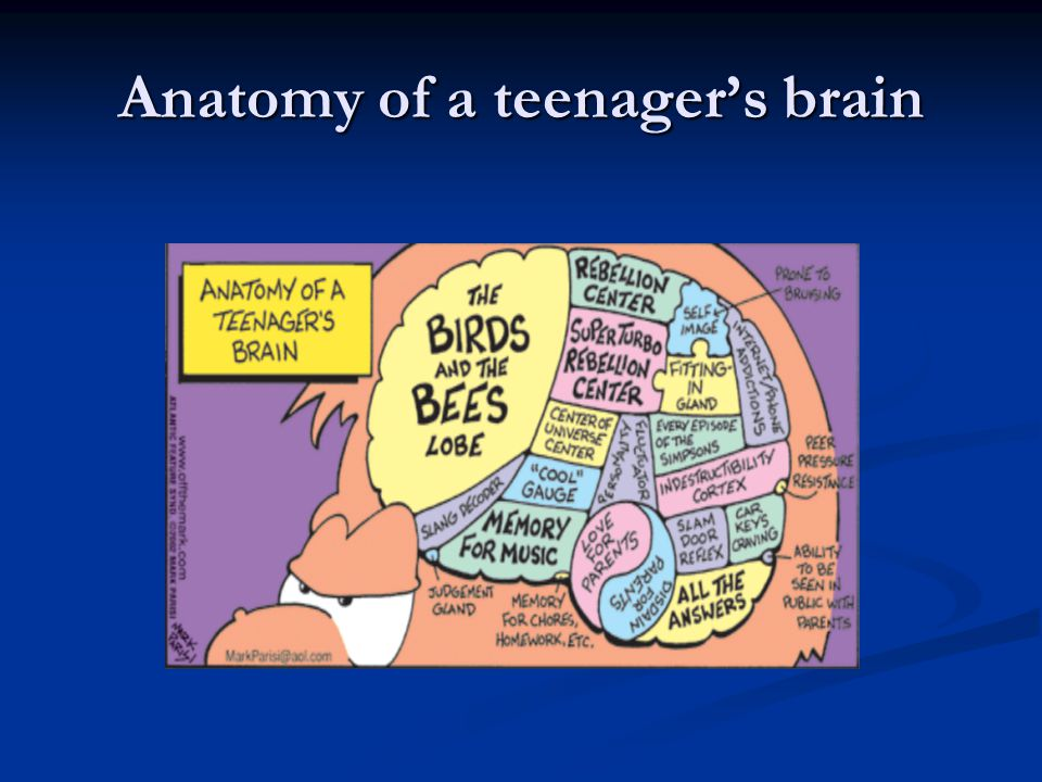 Anatomy of a teenager's brain