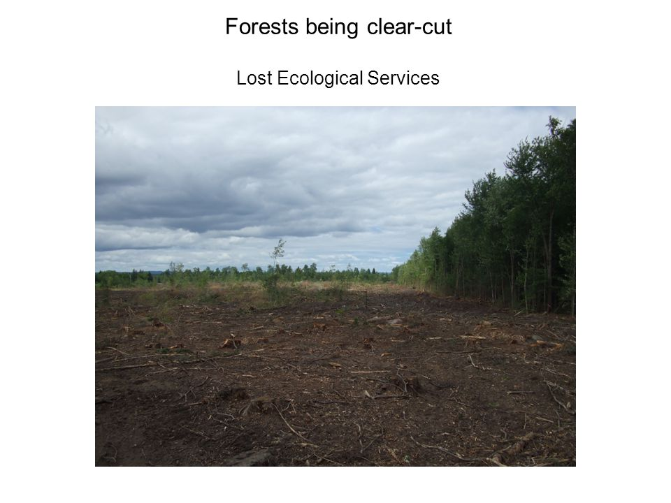 Forests being clear-cut Lost Ecological Services