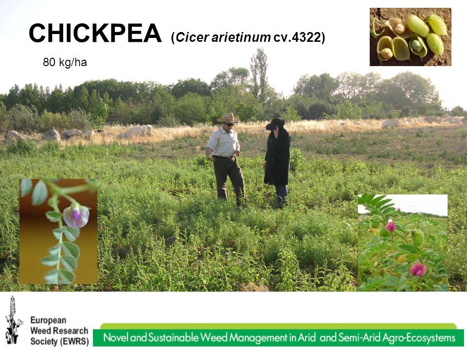 CHICKPEA (Cicer arietinum cv.4322) 80 kg/ha