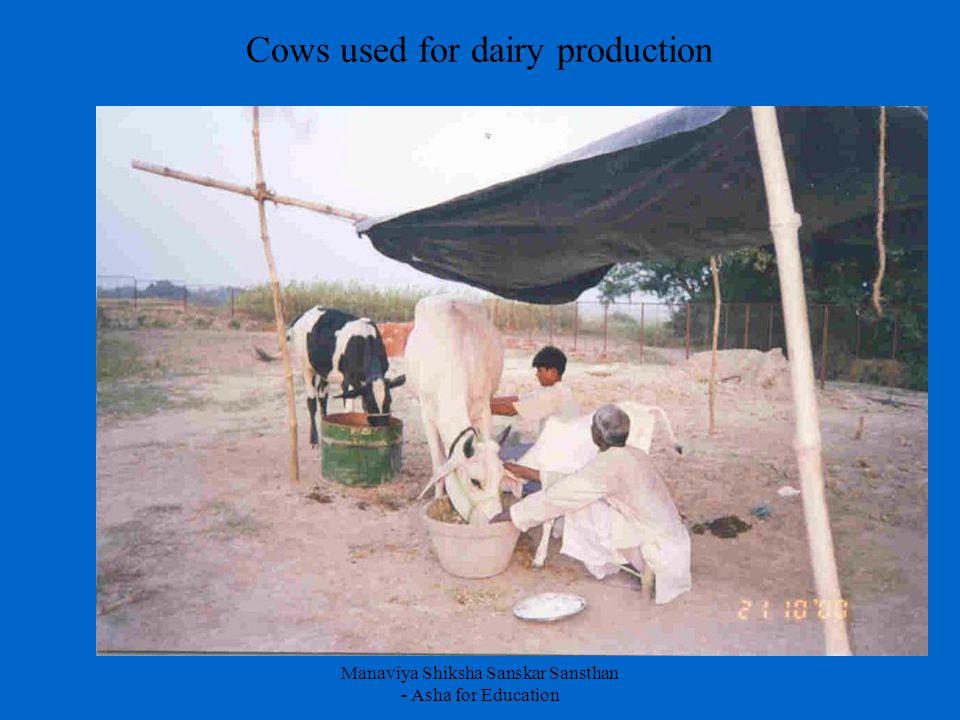 Manaviya Shiksha Sanskar Sansthan - Asha for Education Cows used for dairy production
