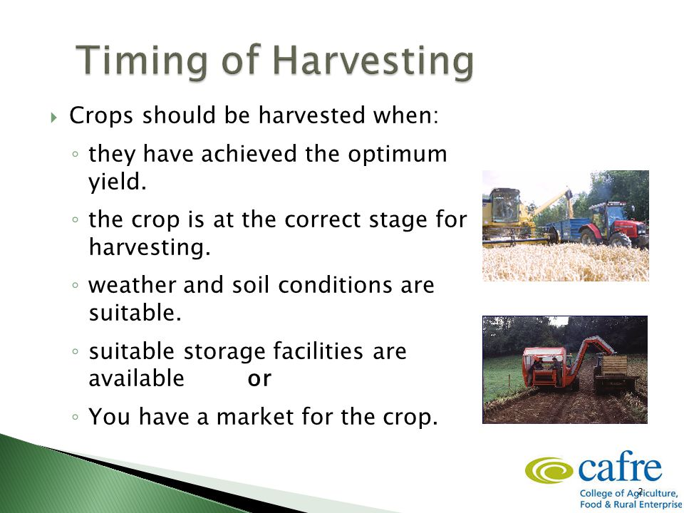 2  Crops should be harvested when: ◦ they have achieved the optimum yield. ◦ the crop is at the correct stage for harvesting. ◦ weather and soil cond