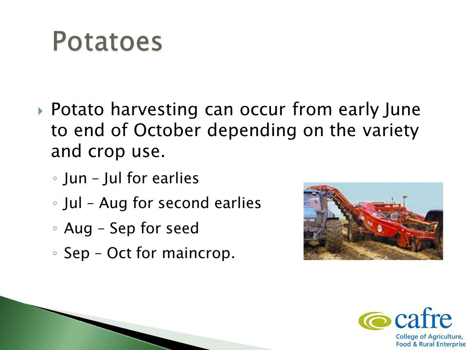  Potato harvesting can occur from early June to end of October depending on the variety and crop use. ◦ Jun – Jul for earlies ◦ Jul – Aug for second